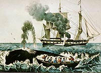 print of Attacking a Right Whale